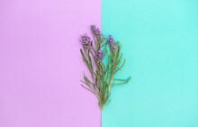 Lavender Flowers Herb Leaves T...
