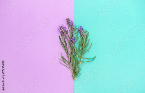 Lavender flowers herb leaves turquoise lila background Floral banner Canvas Print