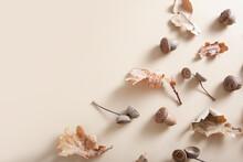 Fallen Oak Leaves, Acorns And ...