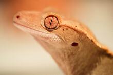 Close Shot Of An Eyelash Crest...