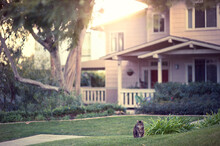 Cat In A Grassy Yard In Front ...