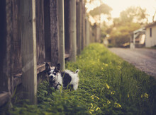 Small Black And White Terrier Smiling In Grassy Alley Near Fence