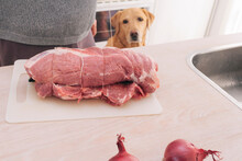 Hungry Dog Staring At Uncooked Rolled Roast On The Kitchen Counter