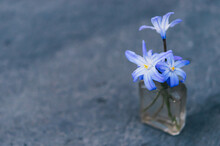 Tiny Blue Flowers In Antique B...