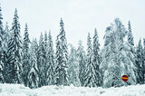Pine Trees with snow and red road sign