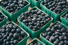 Cartons Of Blueberries At Farm...