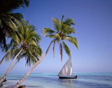 Sail Boat By Palm Trees. The M...