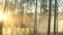 Morning Fog In The Light Summe...