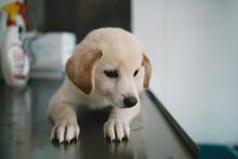 Sick Puppy In Pet Hospital