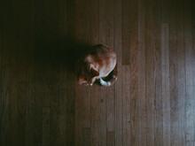 Cat On Dark Wood Floor
