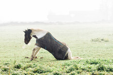Horse Standing Up From The Ground In Foggy Field In Winter Morning