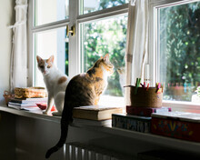 Two Cats Sit On Windowsill: One Cat Looks Straight At Camera, One Cat Looks Out Of The Window