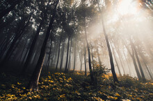 Sun Ray In Fantasy Forest In Autumn