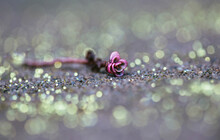 Macro Tiny Pink Succulent On The Ground