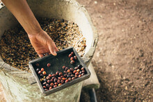 Hulling Coffee Beans