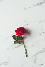 Red Rose On A Marble Background