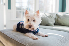 Cute Small White Dog In A Wint...