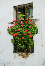 Window With Flowers In Andalucia Spain