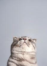 Inferior View Of Cat
