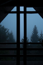 Foggy Forest View From Inside