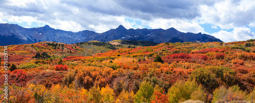 Fototapeta Panoramic view of colorful autumn trees in San Juan mountains