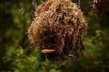 Moss Covered Bird House For Birds To Call Home