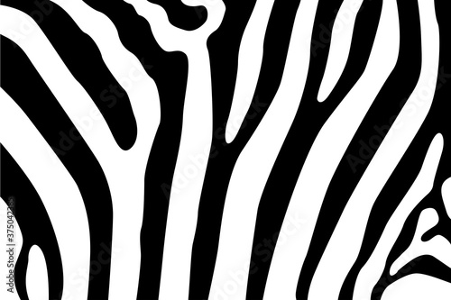 Vector illustration of zebra pattern, animal skin, tiger stripes Billede på lærred