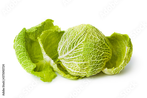 Cabbage Canvas