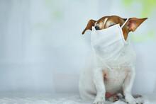 Portrait Of Funny Small Dog Ja...