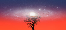 Lone Dead Tree With Amazing An...