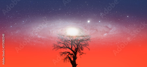 Lone dead tree with amazing Andromeda  Galaxy at sunset Elements of this image Canvas Print