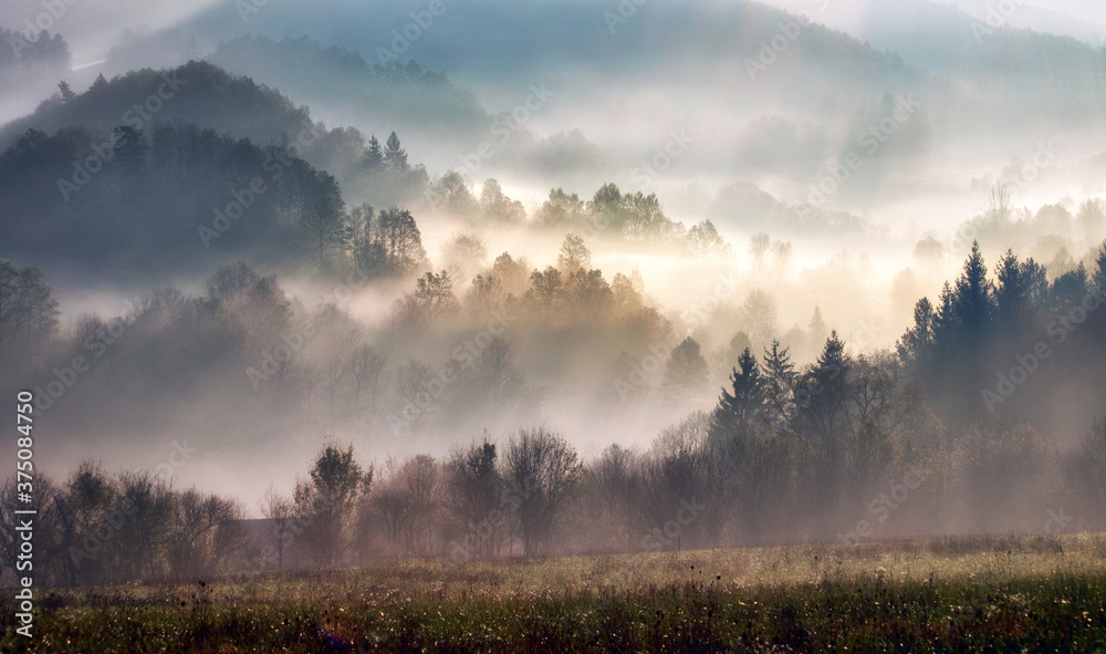 Fototapeta Misty beech forest on the mountain slope in a nature reserve.