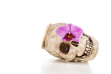 Vase Skull With Phalaenopsis Orchids On A White Background