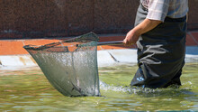 Cleaning The Pool Of Debris Wi...