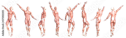 Conceptual anatomy healthy skinless human body muscle system set Fototapet