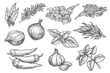 Spice Sketch. Herb And Spice H...