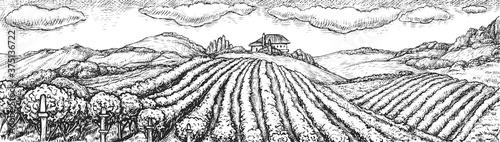 Cuadros en Lienzo Vineyard landscape