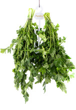 Two Bunches Of Parsley Hang On...