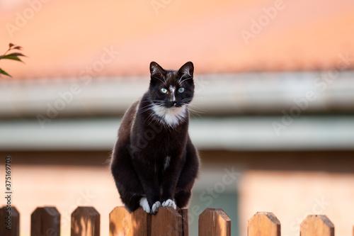 Fotografia Katze