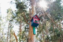 Birdhouse On The Tree, Pine Forest, Pine Trunks, Bird House