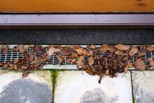Fallen Autumn Leaves Lie On A Metal Gutter.