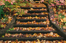 Autumn Leaves Blanketing An Old Outdoor Stairway