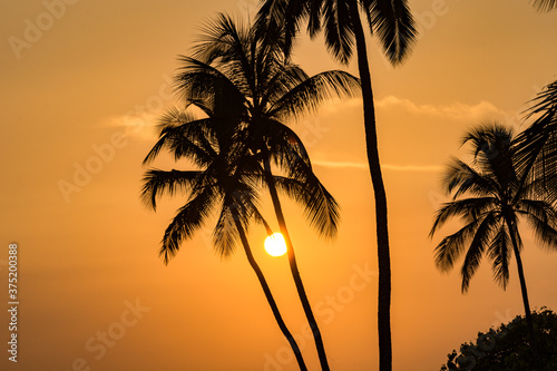 Fotografía palm tree silhouette at sunset in Zanzibar