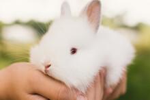 Child Holding Fluffy White Baby Bunny