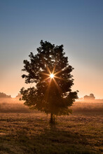 Tree At Sunrise In Front Of A ...
