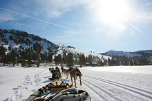 Sled Dogs Pulling People In The Snow On A Sunny Day