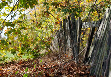 Dilapidated Wood Fence With Trees In The Fall