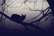 Bewitched: Silhouette Of Cat P...