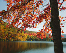 Tree With Vibrant Red Autumn Leaves With Lake In Background