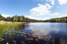 Scandinavian Lake & Forest
